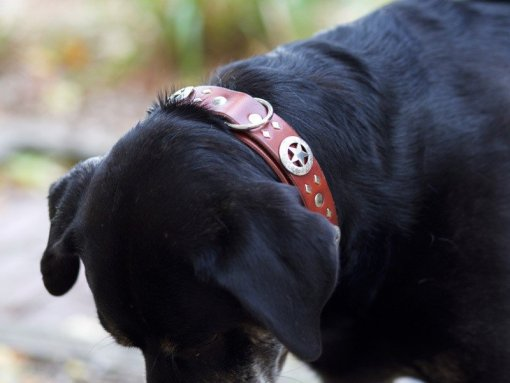 Dog Collars, Custom Leather Dog Collars,Best Leather Dog Collars, Kobicollars