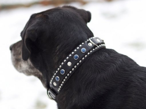 Fancy Leather Dog Collars, Cool Leather Dog Collars, KObicollars