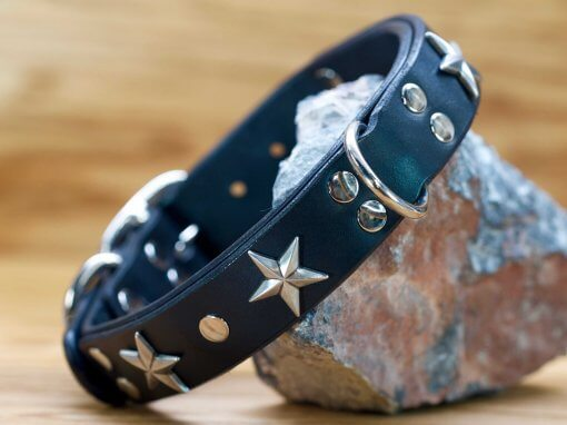 4 beautiful star conchos decorate this dog collar