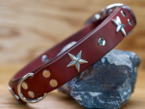 Star Gazer leather dog collar shown in chestnut brown