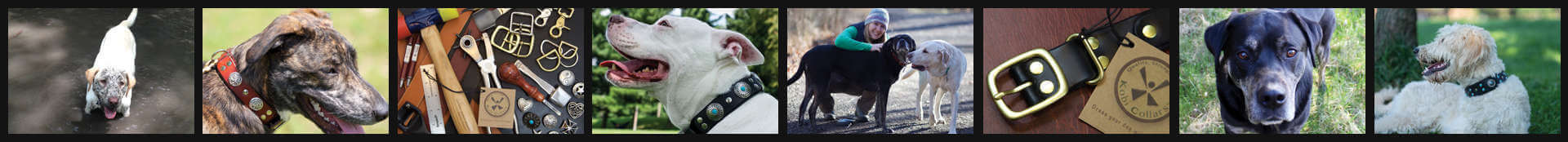 Dog and Collar Collage