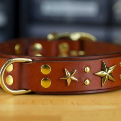 Custom leather dog collar with 6 star conchos
