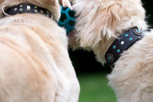 Kobi Collars made to play!
